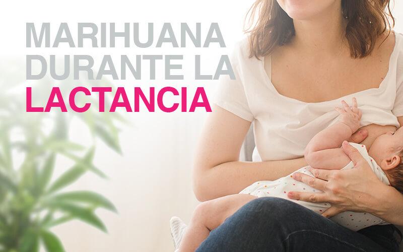 marihuana-en-la-lactancia